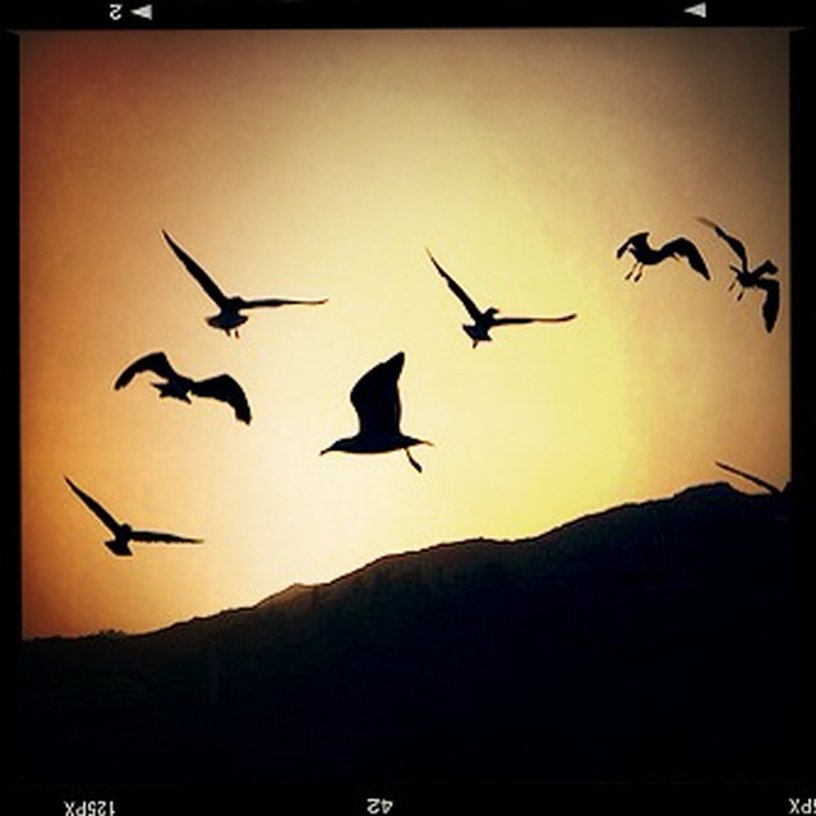 flying, transfer print, bird, auto post production filter, mid-air, animal themes, silhouette, wildlife, sunset, animals in the wild, spread wings, sky, airplane, low angle view, flight, air vehicle, dusk, nature, clear sky, outdoors