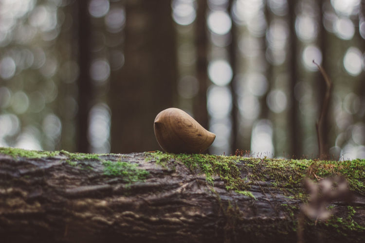 Toy Toys Wooden Wooden Toys Bird Nature Forest Grass Wood Tree Trunk Tree Trunk Plant Mushroom Selective Focus Day Close-up Fungus No People Land Vegetable Focus On Foreground Growth Outdoors Animal Wildlife Toadstool Wood - Material Surface Level