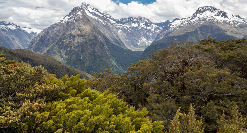 Views on mountain peaks with trees in foreground. shot on routeburn track, new zealand