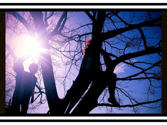my Kids in a tree .... notice my daughters red hair? Family Matters Silhouette Atxkids What Does Freedom Mean To You?