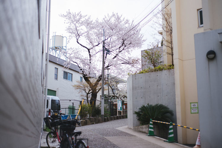 Hidden Sakura. Sakura Season 2016. Architecture Bare Tree Branch Building Building Exterior Built Structure Car City Day House Land Vehicle Outdoors Residential Building Residential Structure Road Sakura Sky Street Transportation Tree Window