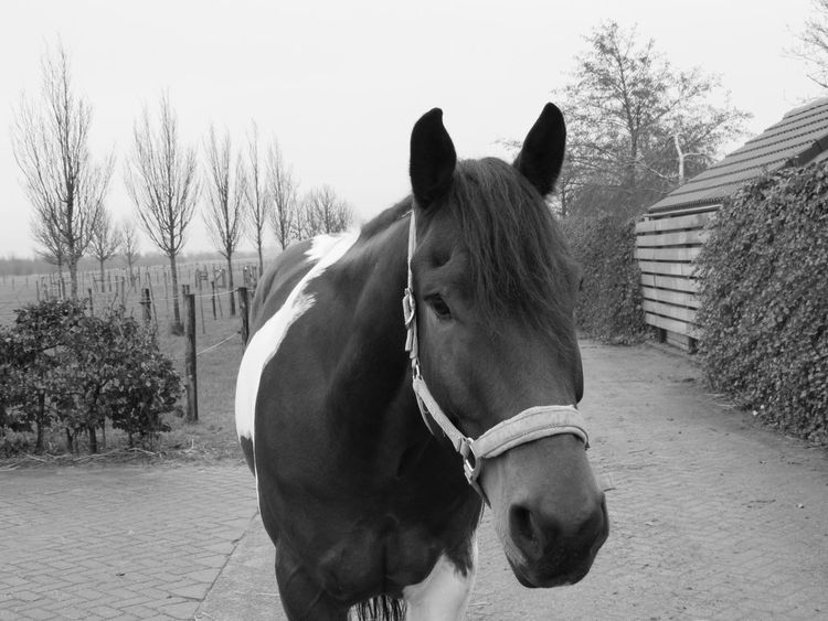 Bullie Horse Horse <3 Black & White Blackandwhite Black And White Blackandwhite Photography Canon Camera Picture Picbyme Love Grass Canonphotography