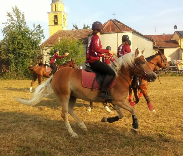 Chevaliers Cheval Cavalier  Cavalli Horses Horse Day Country Fair Outdoors Rural Scene Horseball