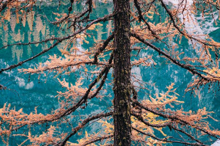 Autumn tree against mountain