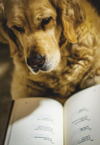 Close-up of dog with book at home