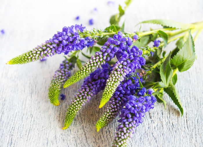Purple Flower Plant Flowering Plant Close-up Freshness Indoors  Fragility Vulnerability  No People Beauty In Nature Nature Inflorescence Selective Focus Table Growth Flower Head Green Color Petal Still Life Softness