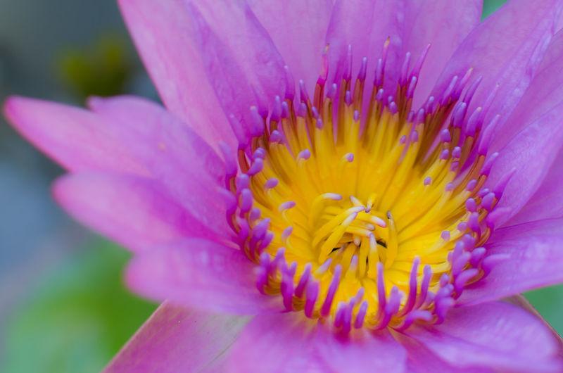 close up violet