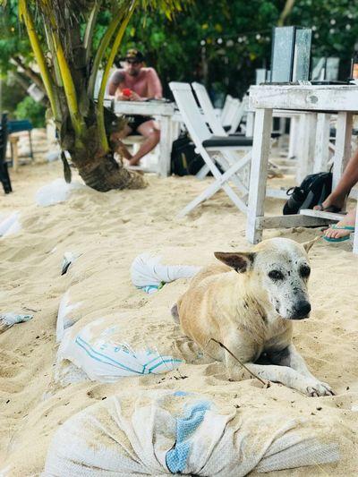 Dog Sad Dog Eyes Freedog EyeEmNewHere Pets One Animal Canine Freedog EyeEmNewHere Pets One Animal Canine