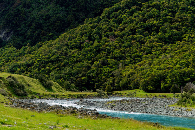 Aspiring Blackandwhite Day Green Green Color Lush - Description National Park Nature New Zealand No People Outdoors River Tree Water