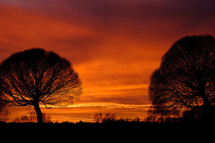 Silhouette bare trees on field against romantic sky at sunset