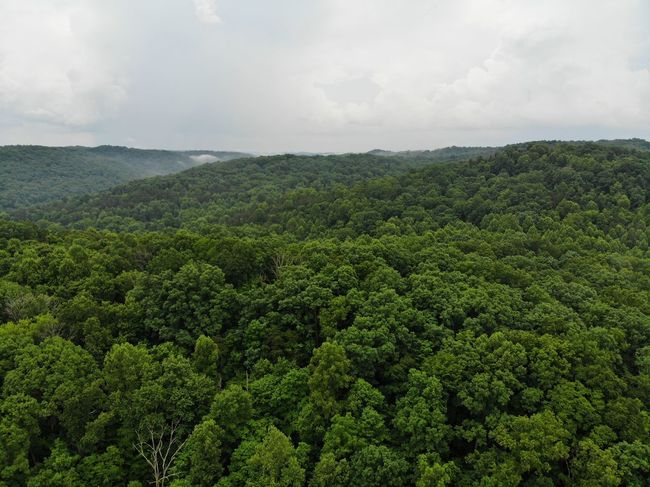 Forest Photography Forest Trees Treelines Green Color Green Textured  Texture Textures and Surfaces Aerial Shot Dronephotography Aeriel Photo Aerial View Tea Crop Tree Tree Area Rural Scene Agriculture Forest Green Tea Social Issues Hill Field Valley Satoyama - Scenery Lush - Description Lush Foliage Greenery Woods Grove