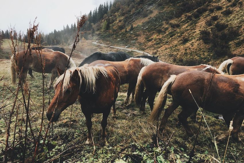 Cold rainy weather Nature Horse Cold Days Rainy Days Foggy Day VSCO Vscocam Alps Southtyrol  Mountains Picoftheday WeLoveNature