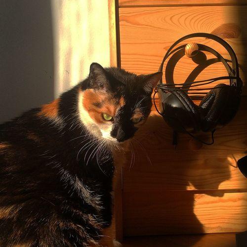 I Love My Cat ❤ Cat Sunny Day Lazy