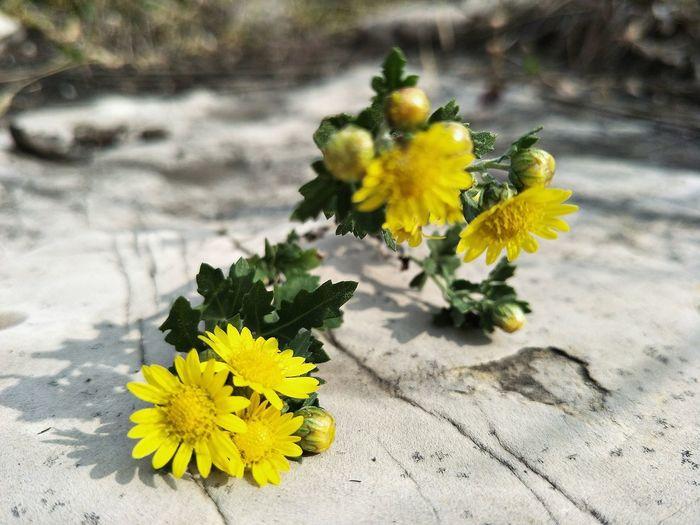 花开堪折直须折 Flower