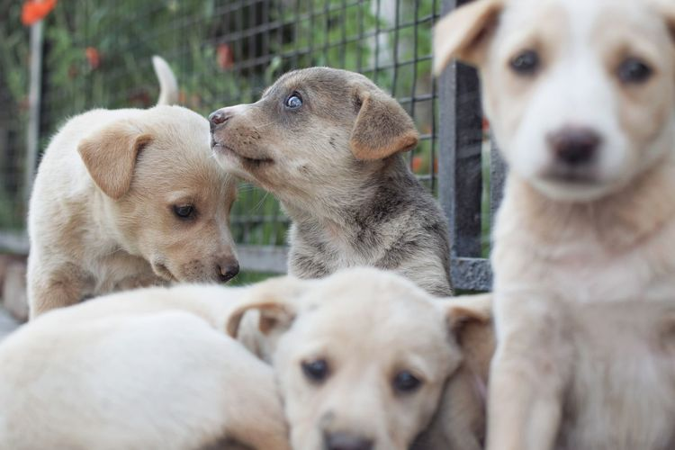 Eyes shining with dreams, heart lit with hope 🌄😇. InMakin! Words Randomness Selective Focus Nikon Puppies Eyes Outdoors Dog Pets Animal Animal Themes Outdoors Young Animal Domestic Animals Togetherness No People Close-up Inner Power