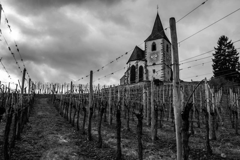 Eglise Noir Et Blanc Nuages Et Ciel Sapin Vigne Vierge