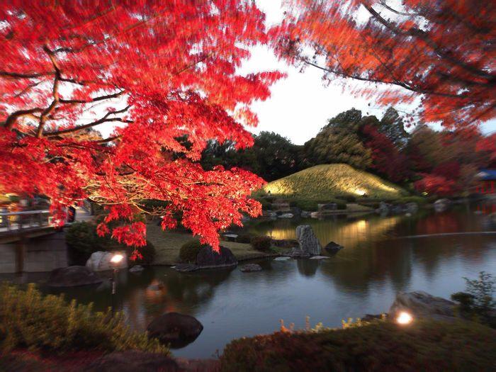 Tree Autumn