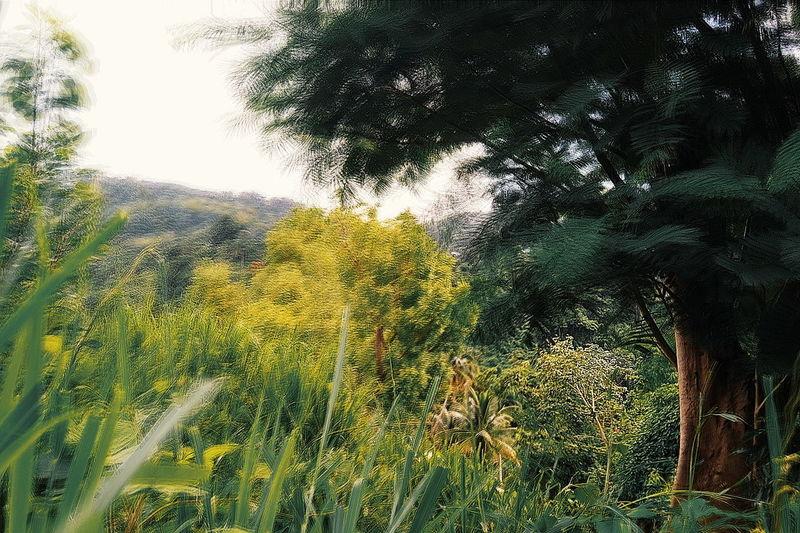 Nature VSCO