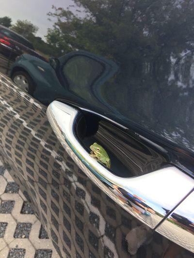 Toad Frog Transportation Mode Of Transportation Car Motor Vehicle Land Vehicle Road Day