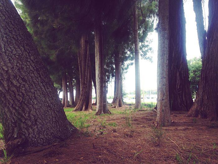 Nature Enjoying Life Outdoors Trees