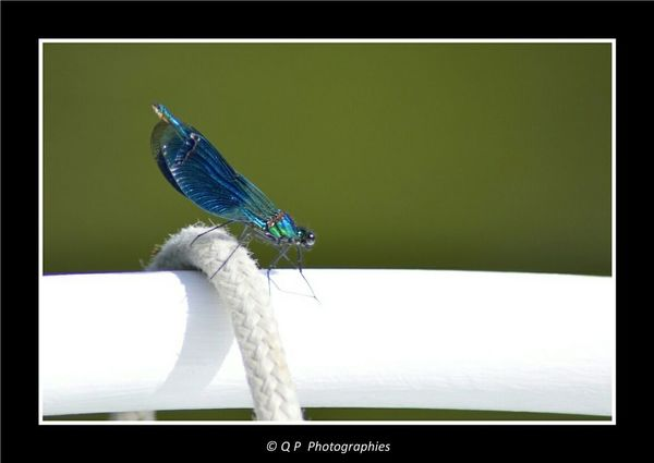Libellule Dragonfly Nature On Your Doorstep Canals And Waterways Canal Nature Nature Photography Canal Life