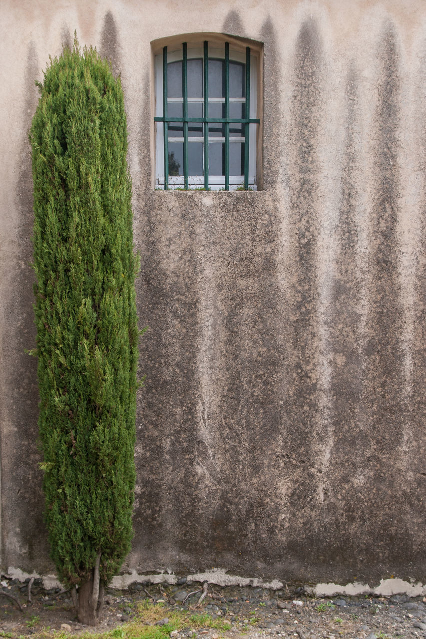 architecture, built structure, plant, window, building exterior, building, day, no people, nature, growth, house, wall - building feature, green color, residential district, outdoors, grass, wall, tree, ivy, old, hedge