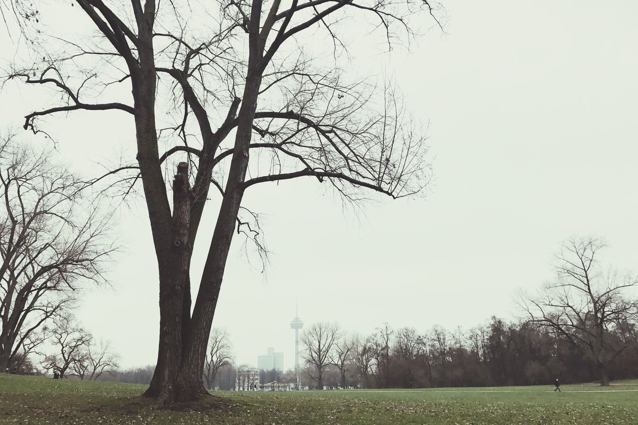 bare tree, tree, branch, tranquility, landscape, nature, beauty in nature, tree trunk, clear sky, tranquil scene, outdoors, day, scenics, grass, lone, no people, sky