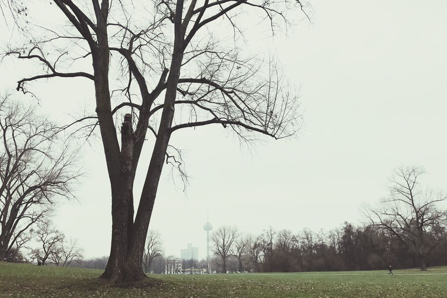 Breathing Space Urban Impressions Urban Skyline Urban Landscape Bare Tree In The Park Tree Branch Tranquility Nature EyeEm Nature Lover Tree Trunk Landscape Day Outdoors Grass Tranquil Scene Beauty In Nature Scenics Lone Quiet Tranquility The Week On EyeEm Shades Of Winter