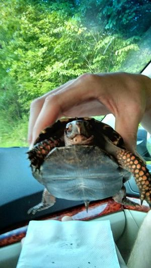Saved a Turtle today! Turtle Love Turtle Cuteness I ♥ Turtles