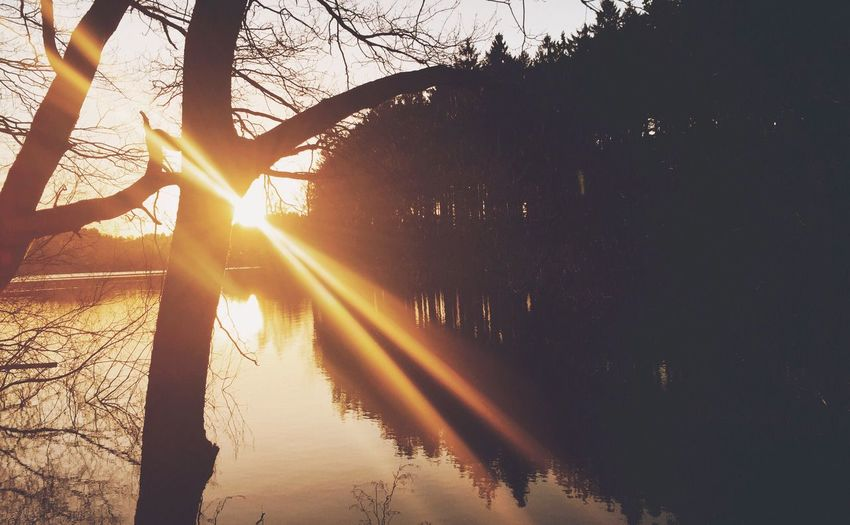•rays• Sun