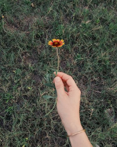 Human hand holding flower petals on field