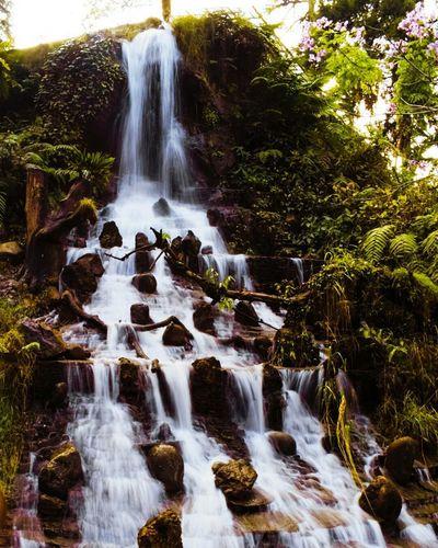 Waterfall Nature Beauty In Nature Beauty CompanyGarde Mussoorie Manduwala Dehradun.