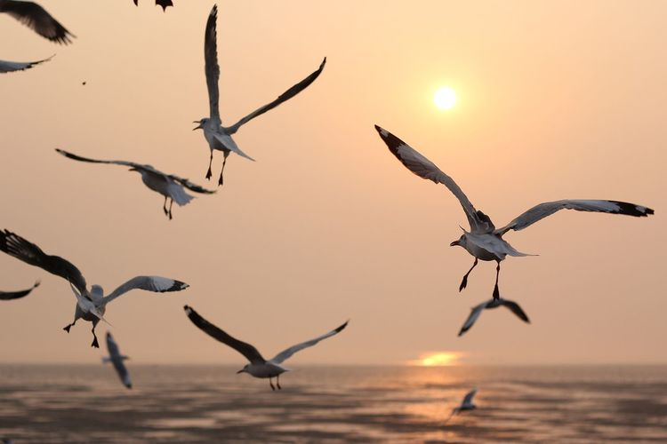 Birds flying over sea at sunset