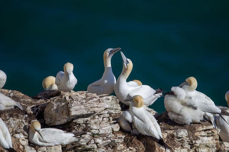 White birds on rock by lake