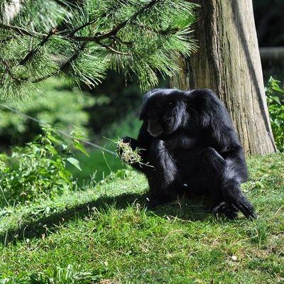 Lonely Zoo Jaderberg