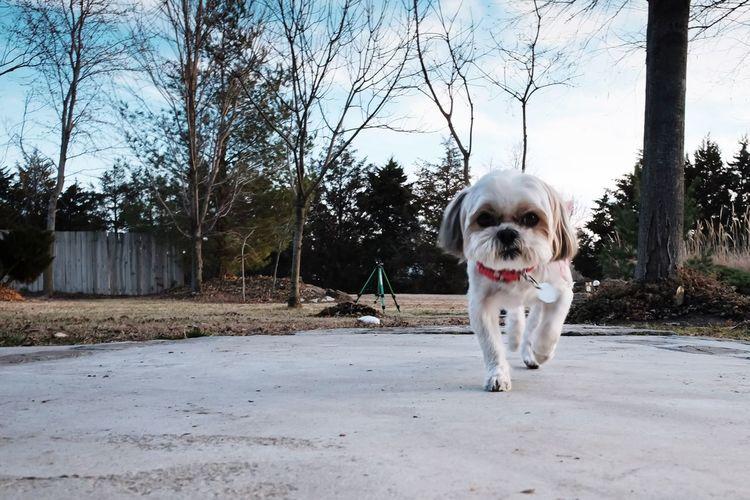 Zigg Dog Pets