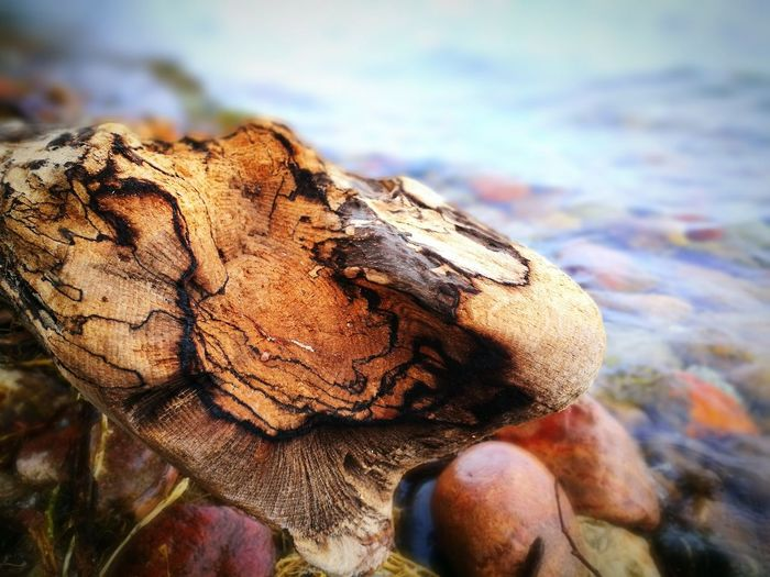 Wood - Material EyeEm Selects Close-up Tree Ring Driftwood Calm Ocean Dead Plant Fallen Tree Tree Stump Dried Dead Tree Dried Plant Wilted Plant Shore Dry