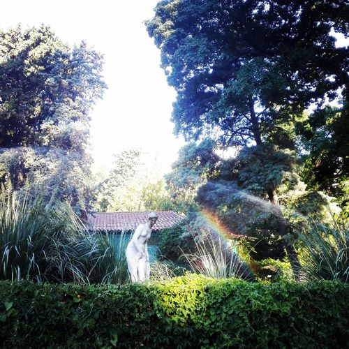Rainbow in the park Tree Sculpture Travel Destinations Plant Tranquility Nature Buenos Aires, Argentina  Carlosthays Rainbow Colors Rainbow🌈