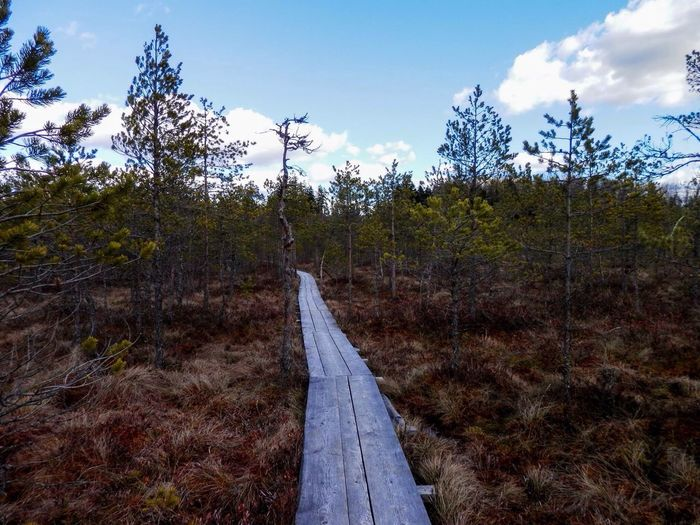 Showcase April Trails of wilderness Hiking Hike Nature Boardwalk Sky Clouds Bog Trees Beautiful Nature Valgesoo Estonia South-estonia