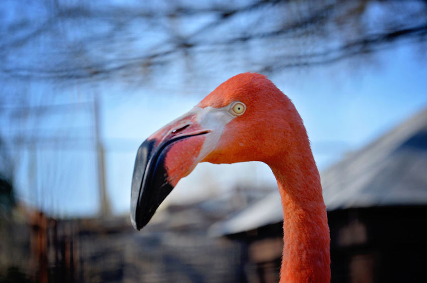 Flamingo Animal Themes Animal Wildlife Animals In The Wild Beak Beauty In Nature Bird Close-up Day Focus On Foreground Nature No People One Animal Outdoors
