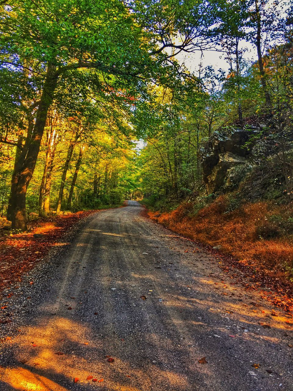 tree, the way forward, road, nature, forest, diminishing perspective, autumn, day, tranquility, no people, tranquil scene, beauty in nature, scenics, outdoors, leaf, growth, landscape, branch, sky