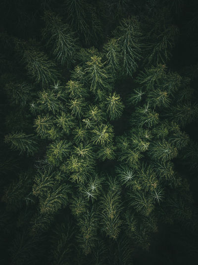 Green Color Pine Tree Trees Aerial View Backgrounds Beauty In Nature Branch Coniferous Tree Directly Above Field Full Frame Green Color Growth Nature Needle - Plant Part No People Outdoors Pattern Pine Tree Plant Plant Part Tranquility Tree Wallpaper The Great Outdoors - 2018 EyeEm Awards