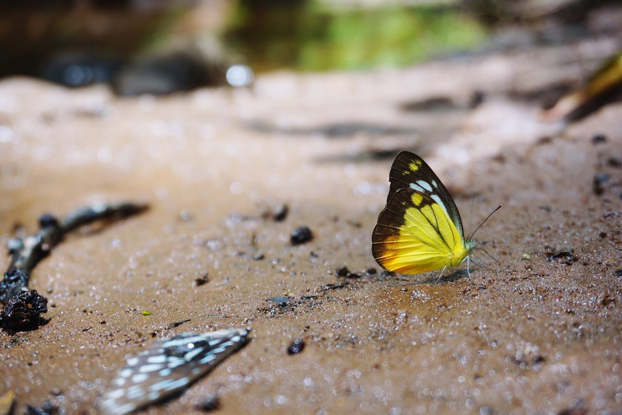 Surface Level Shot Of Butterfly On Wet Field
