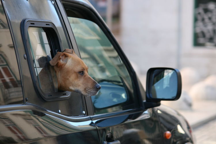 Dog looking through car side-view mirror