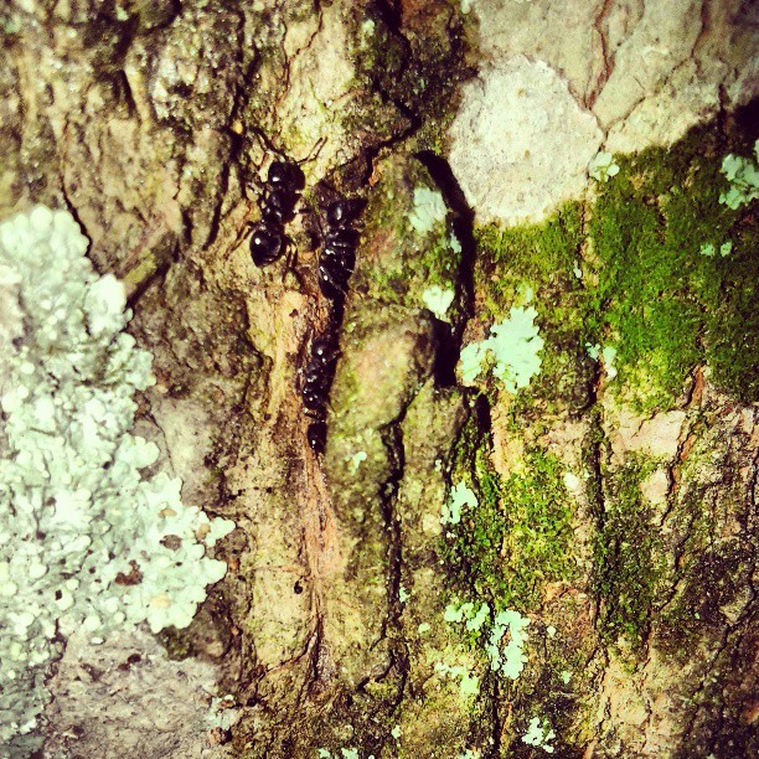 tree, textured, growth, nature, tree trunk, rough, rock - object, high angle view, moss, plant, day, outdoors, tranquility, close-up, sunlight, rock, beauty in nature, no people, rock formation, bark