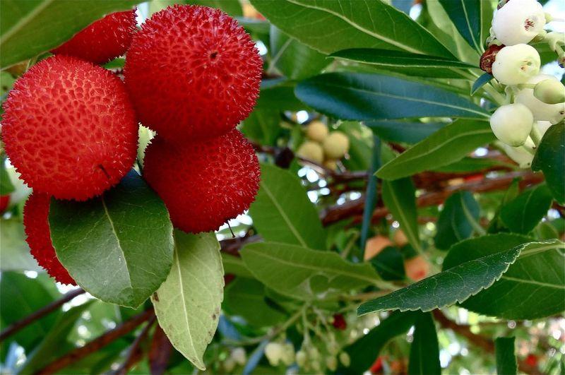 EyeEm Nature Lover Nature_collection EyeEm Best Shots - Autumn / Fall TreePorn