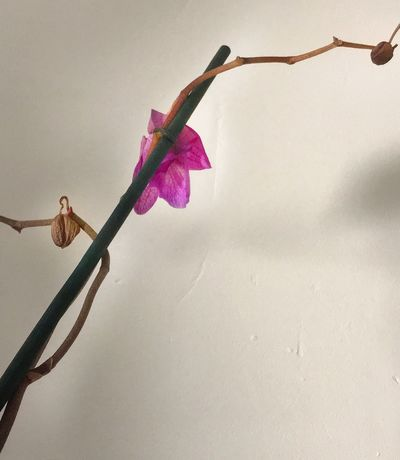 Line And Shape Purple Brown White Fying Orchid Dying Flower Orchid Branch Orchid Plant Flower Nature No People Fragility
