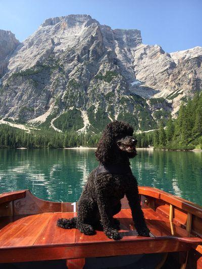 Dog sitting on boat against mountain