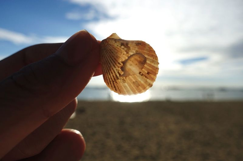 Close-up of hand holding shell against sky
