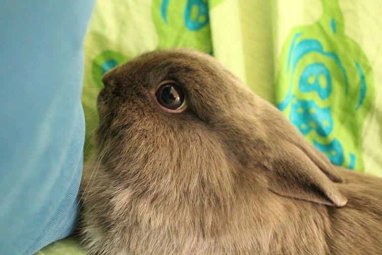 One Animal Animallife Rabbit Muffy Mylove Bigeyes Coniglio Sweet Moments Sweetrabbit